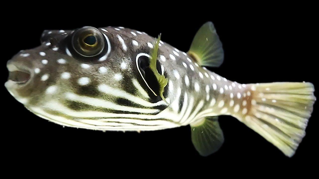 Aquariums The Secret Fish The King Of Diy New Aquarium Fish Aquarium Fish Aquarium Aquarium Filter
