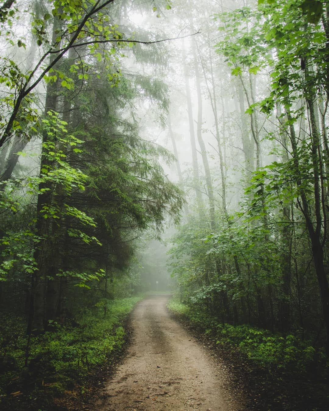 Forest Path In Mist Tarvastu Estonia Hendrik
