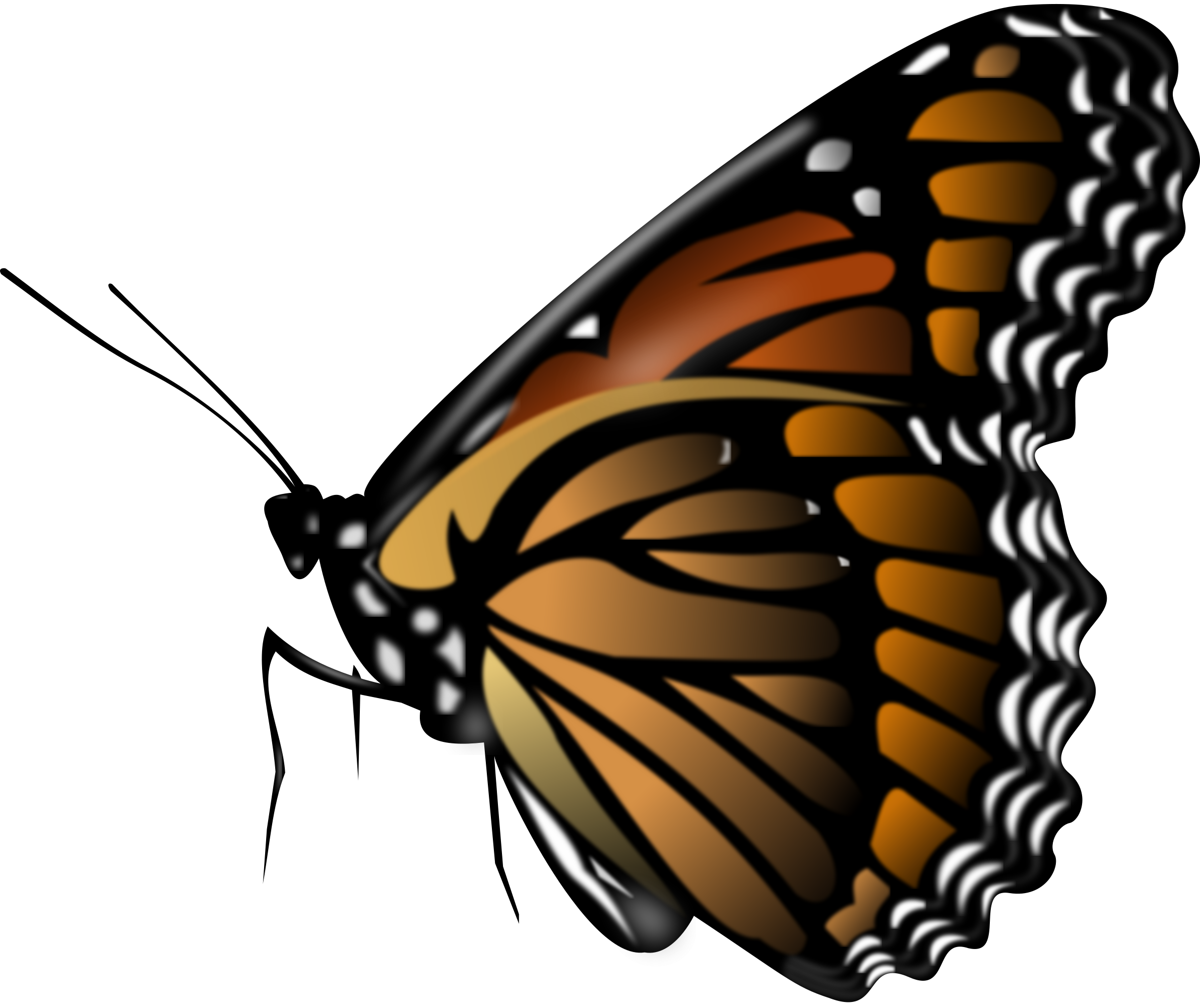 Butterfly Png Image Butterfly Clip Art Butterfly Images Monarch Butterfly