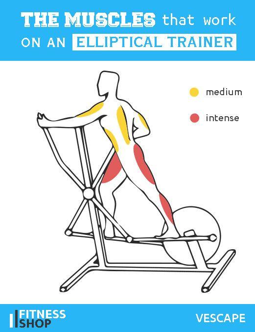 Crosstrainer Elliptical Bike Which Muscles Work