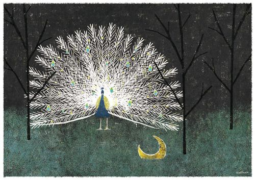 Akira Kusaka, Peacock Nights