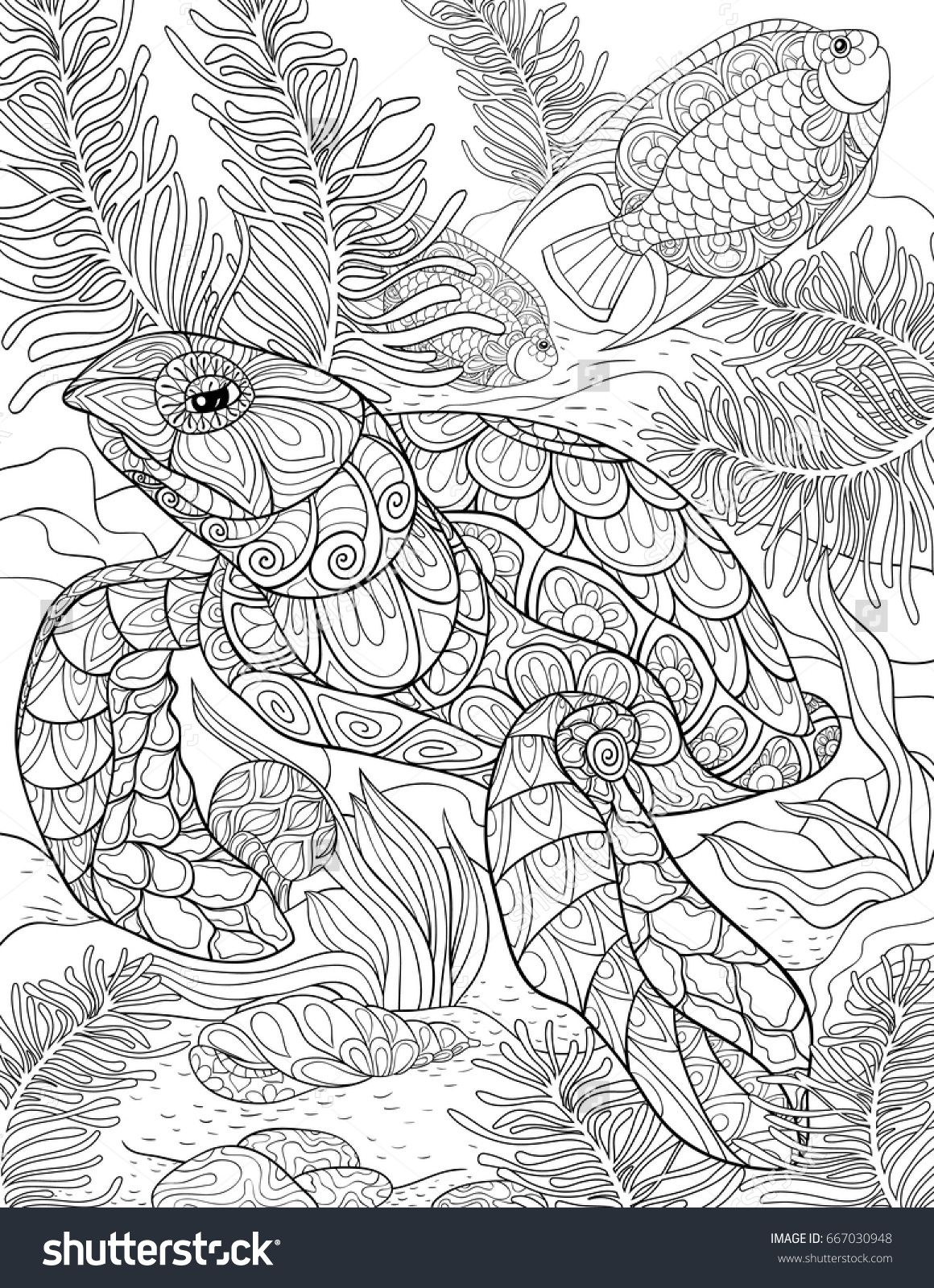 Adult Coloring Page Book A Turtle Line Art Style Illustration