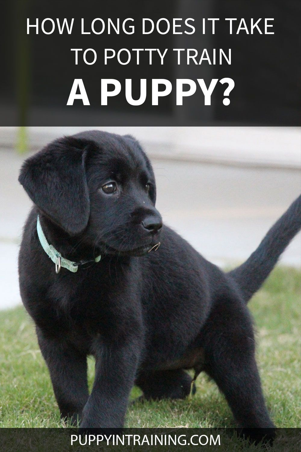 How Long Does It Take To Potty Train A Puppy In 2021 Potty Training Puppy Puppy Training Puppy Potty Training Tips
