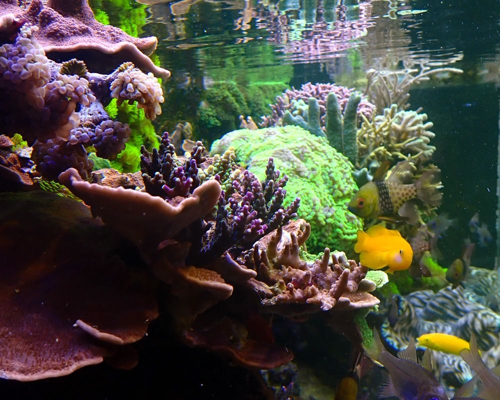 Reef Sleep Do You Ever Dream About Your Tank Corals This Hobby Photo Lasse Https Www Reef2reef Com Threads Do You Ever Dre In 2021 Coral Reef Aquarium Dead Fish