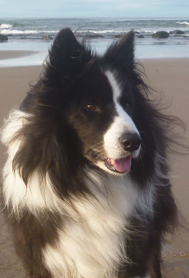 Pin By Elaine Partin On Border Collies Collie Dog Animal Humor Dog Border Collie Puppies