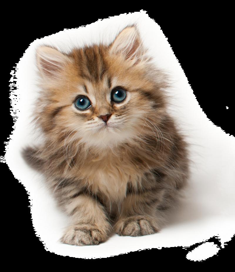 kitten - Google Search