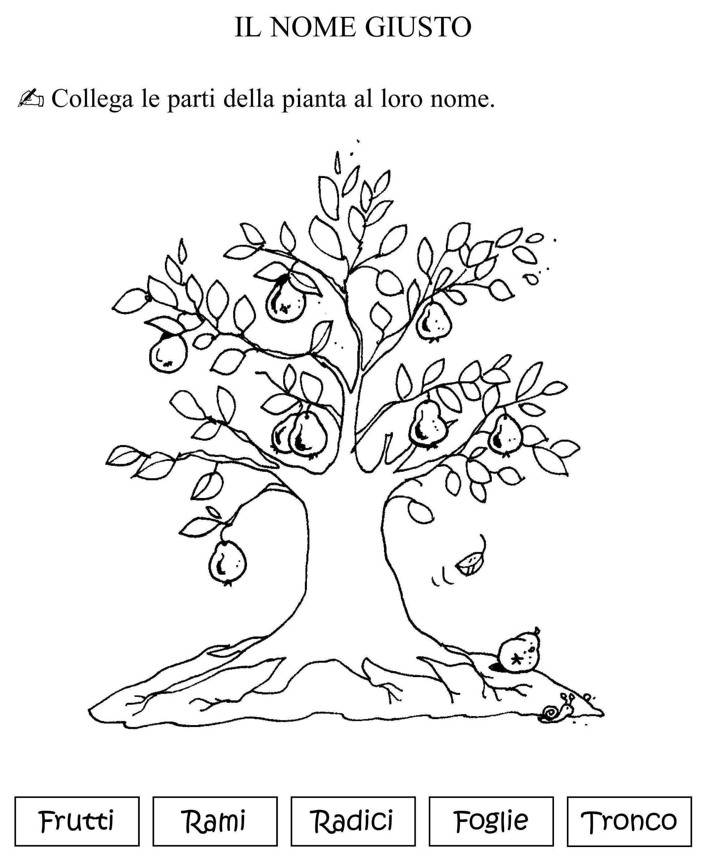 Parti dell 39 albero classe materiale e schede for Nomi dei gemelli diversi