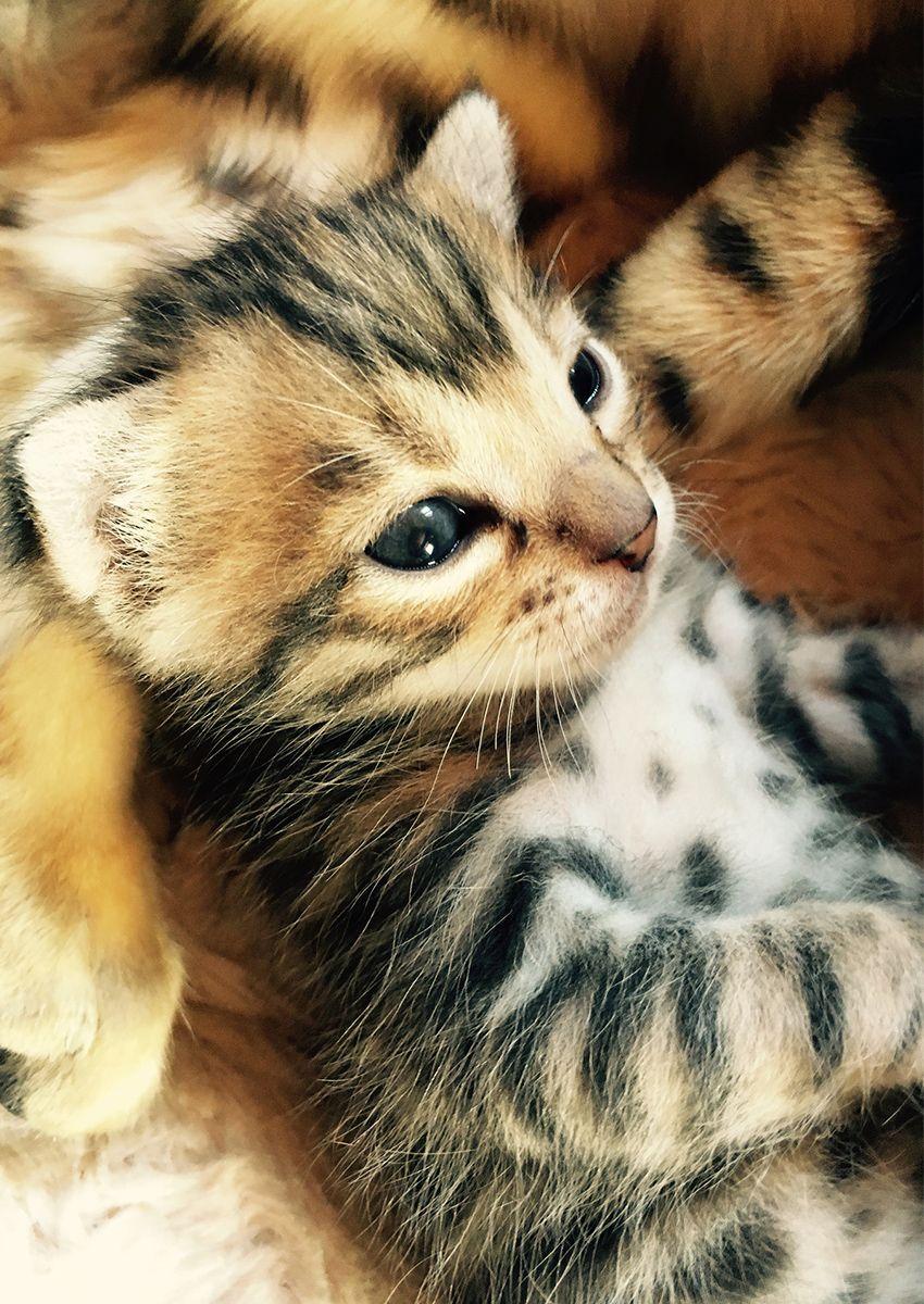 Pin on cats / natural