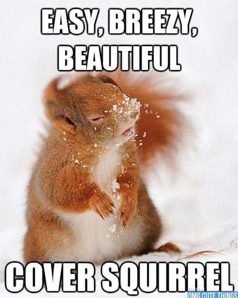 Cover squirrel be mine <3