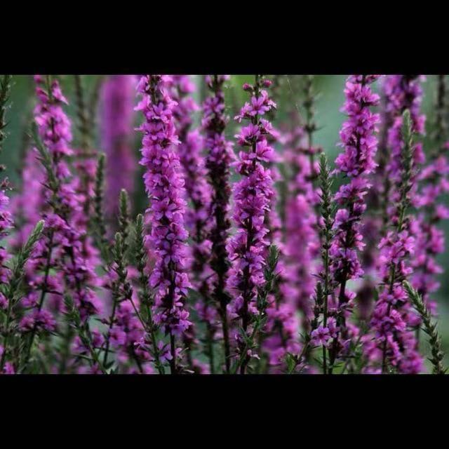 1000Pcs Plant Flower Seeds for Beautiful Garden Decoration – 20seeds  1000pcs
