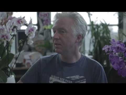 Philip Treacy Orchid  37dd10d26ddc