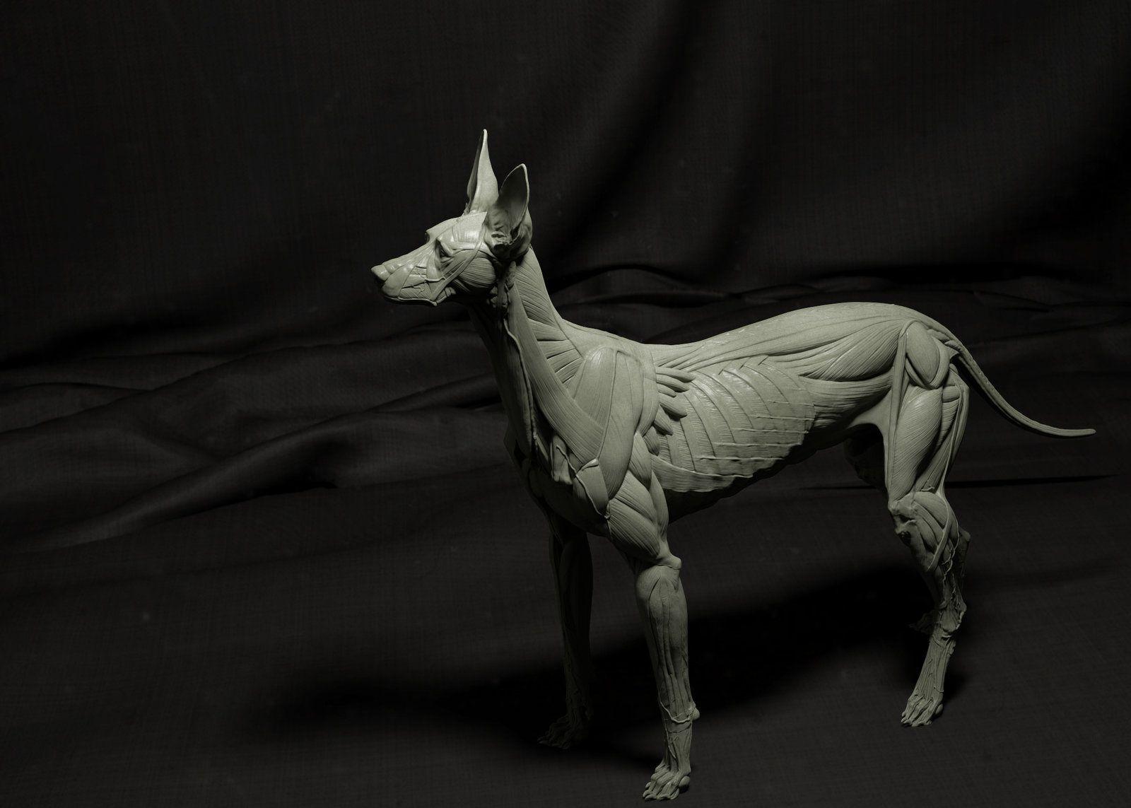 Canine Écorché, Idan Itzhaki on ArtStation at https://www.artstation ...