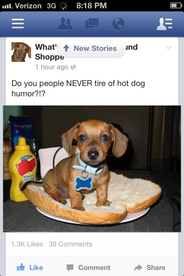 Baby doxie Dog food recipes, Doxie