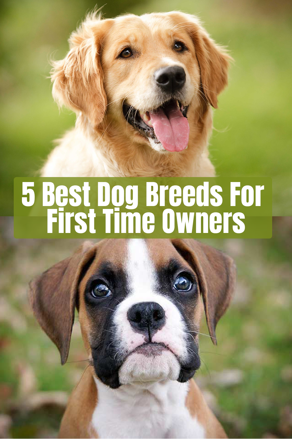 5 Best Dog Breeds For First Time Owners Lazy Dog Breeds Dog Breeds Best Dogs