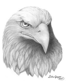 Drawing-Eagle Head