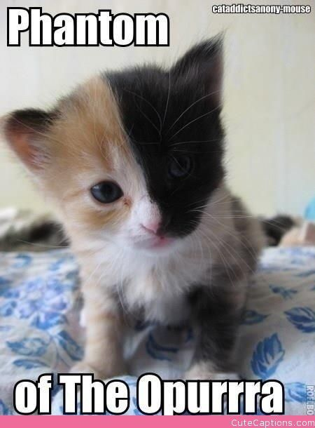 Kittens Pets Cats Funny Animals Pets Cute Animals Funny Animals Kittens Cutest