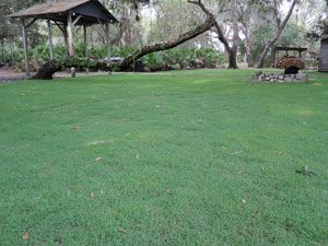 Discovery Bermudagrass Sod Solutions Homeowners Bermuda Grass Outdoor Gardens Dark Blue Green