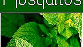 20 Plants that Repel Mosquitos #mosquitoplants 20 Plants that Repel Mosquitos #plantsthatrepelmosquitoes 20 Plants that Repel Mosquitos #mosquitoplants 20 Plants that Repel Mosquitos #plantsthatrepelmosquitoes 20 Plants that Repel Mosquitos #mosquitoplants 20 Plants that Repel Mosquitos #plantsthatrepelmosquitoes 20 Plants that Repel Mosquitos #mosquitoplants 20 Plants that Repel Mosquitos #plantsthatrepelmosquitoes