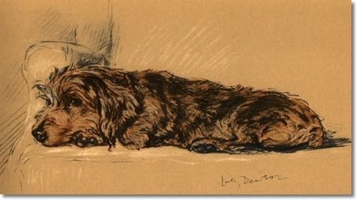 LOVELY LONG HAIRED DACHSHUND DOG PRINT MOUNTED READY TO FRAME