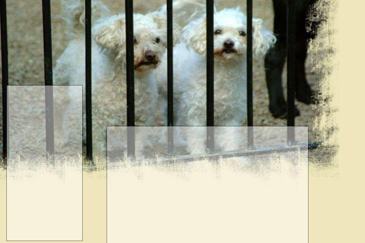 Tietoa koirien ruokinnasta