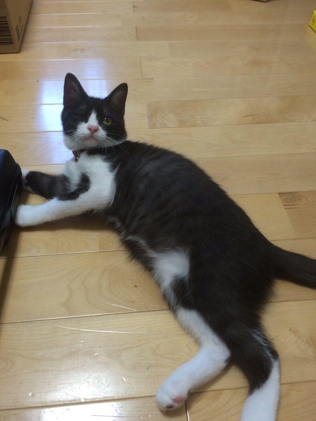 【画像】うちの猫洗ったwwwwwww Cats, Animals