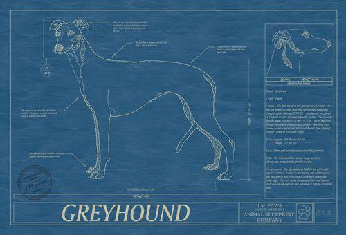 Animal blueprint company greyhound as blueprint greyhounds in art animal blueprint company greyhound as blueprint malvernweather Gallery
