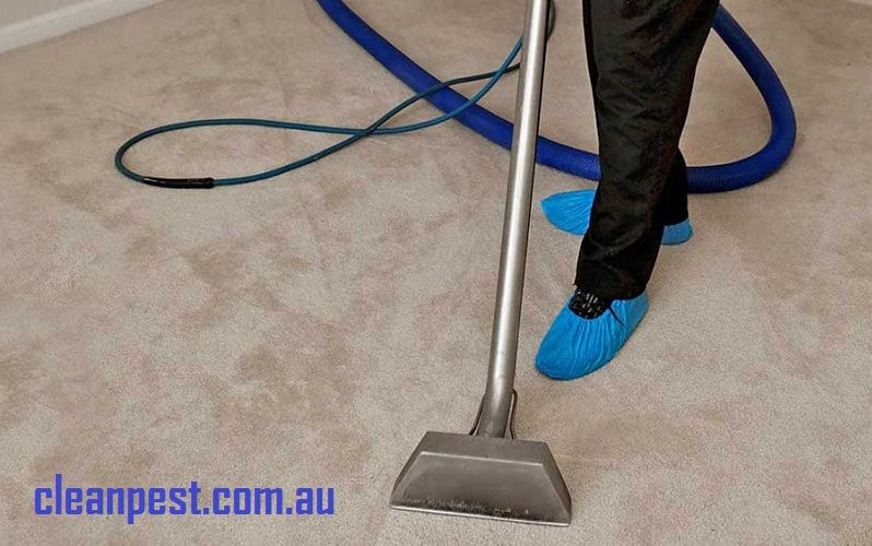 Most Of The People Are Not Installing Carpet In Their Home In Order To Get Extreme Comfort And It How To Clean Carpet Steam Clean Carpet Carpet Cleaning Hacks