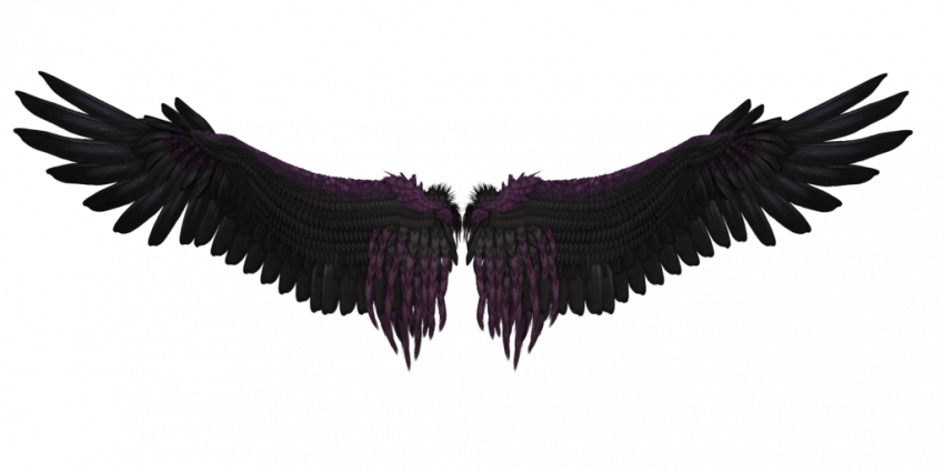 600 Best Bird Wings Png Full Hd Transparent Images Wings Png Angel Wings Png Black Angel Wings
