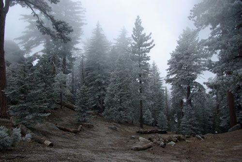 Boulder Basin Campground, Idyllwild - San Bernardino