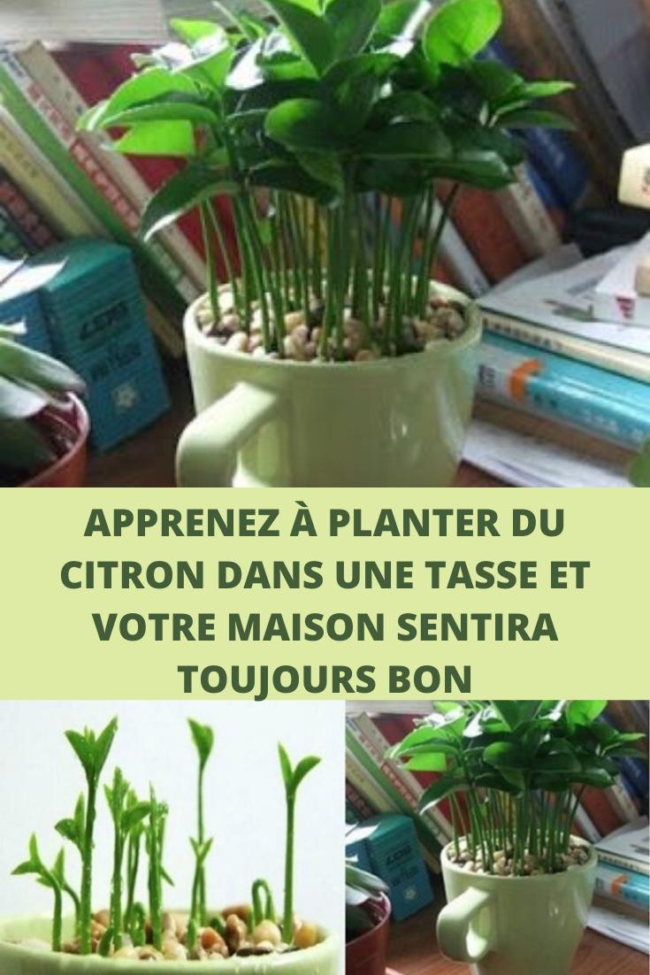 Epingle Par Anne Berube Sur Autre En 2020 Jardinage En Pots