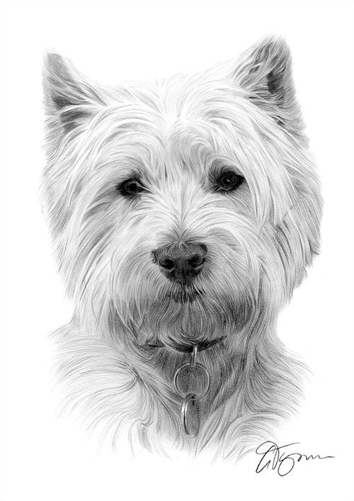 1 WESTIE dog L Edition art drawing prints  2 sizes A4//A3 /&  Card available