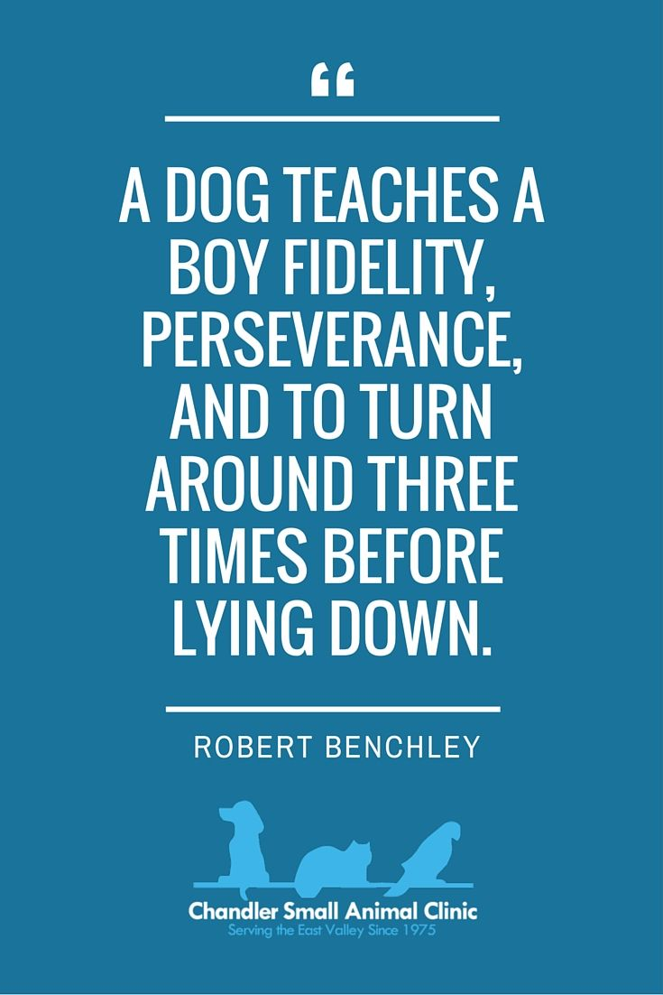 Inspirational Quote for Pet Owners Chandler Small Animal