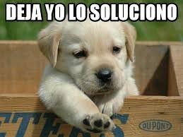 Resultado De Imagen Para Memes En Espanol Perros Y Gatos Tiernos Imagenes De Perros Perritos Tiernos