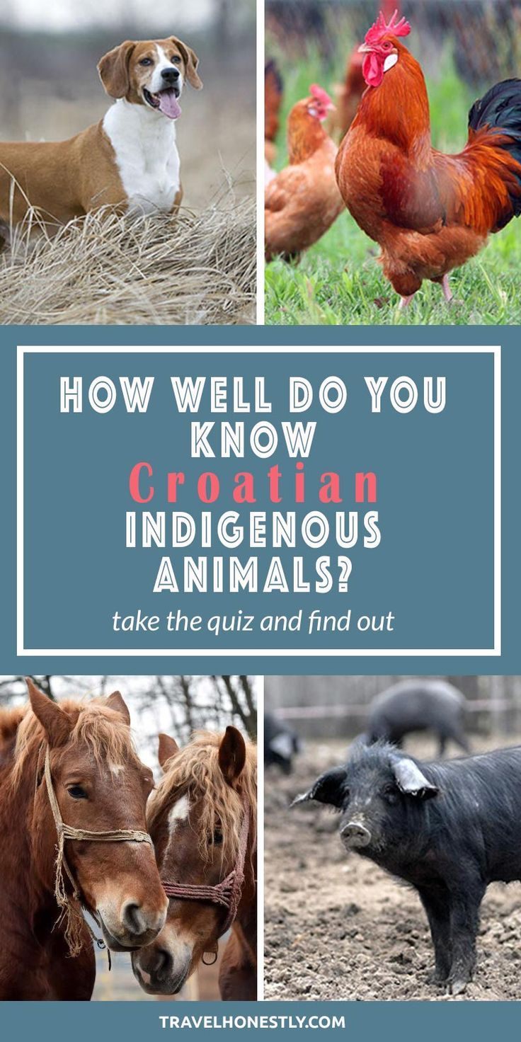 Fun Quiz How Well Do You Know Indigenous Croatia Animals