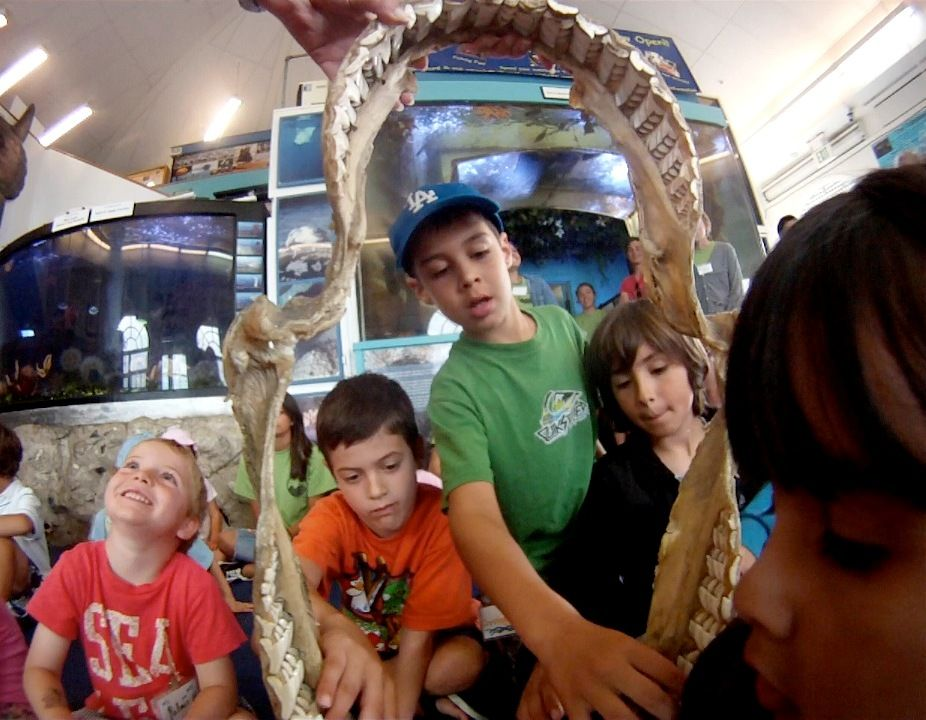 Marine Science And Environmental Education Field Trips Grades Pre