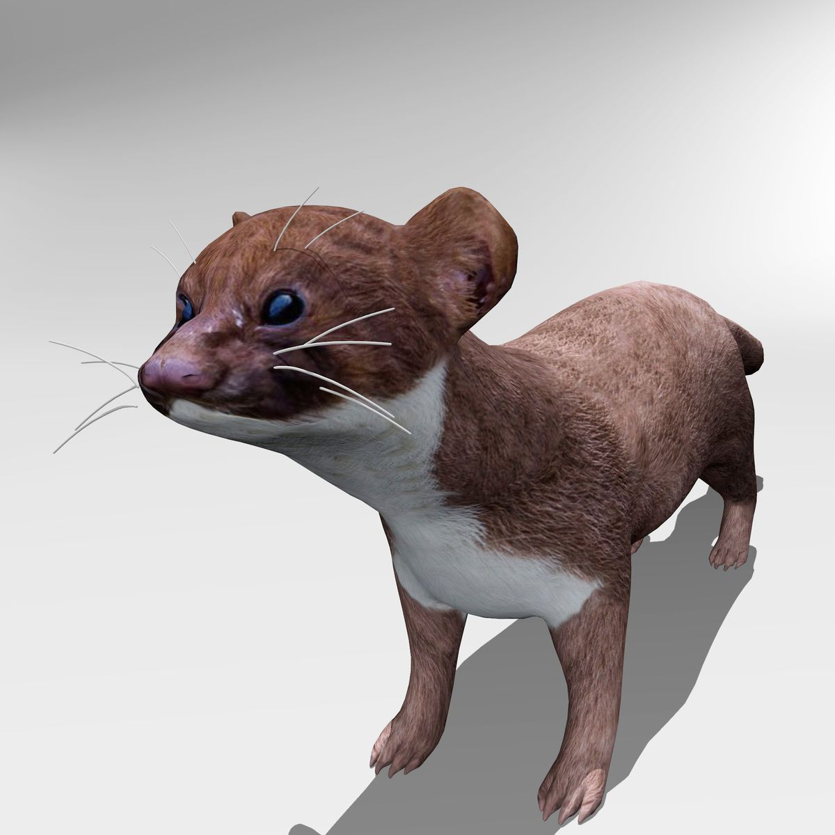 Weasel. This royalty free 3D model or texture is available