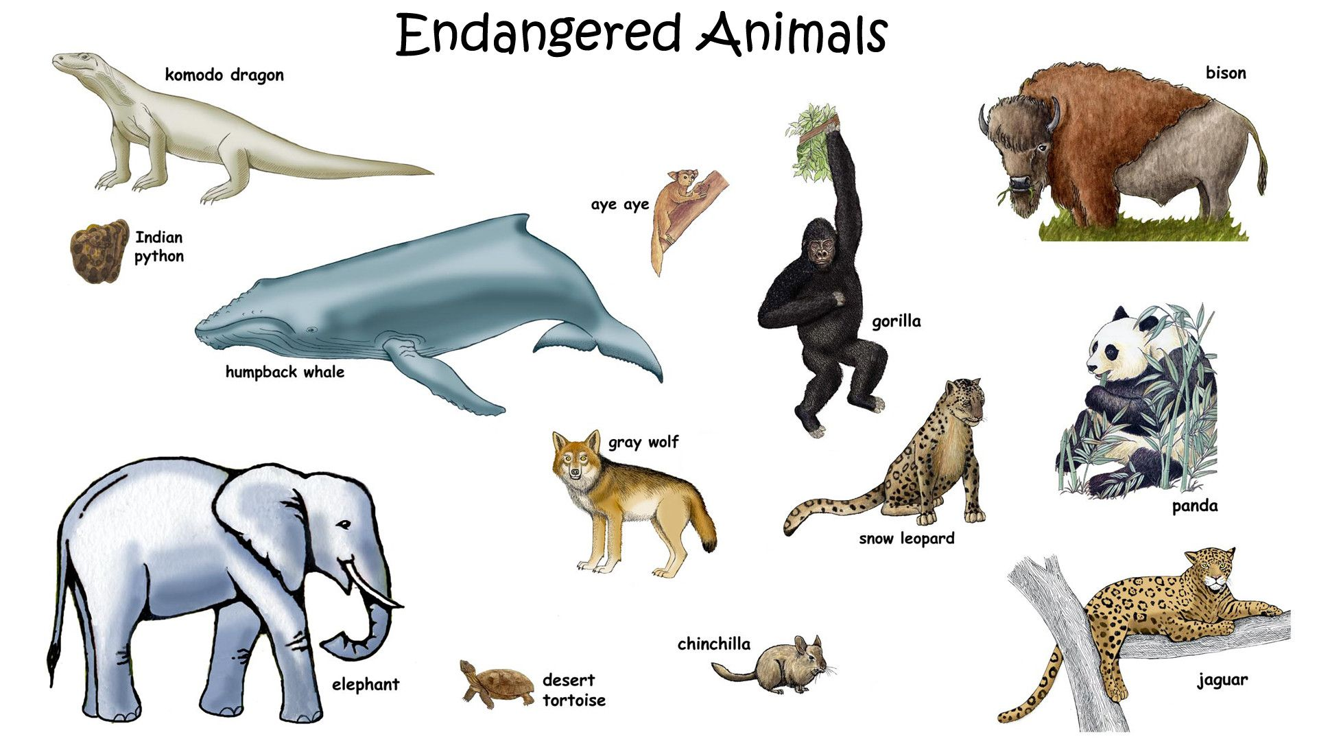 Endangered Species Drawing For Kids