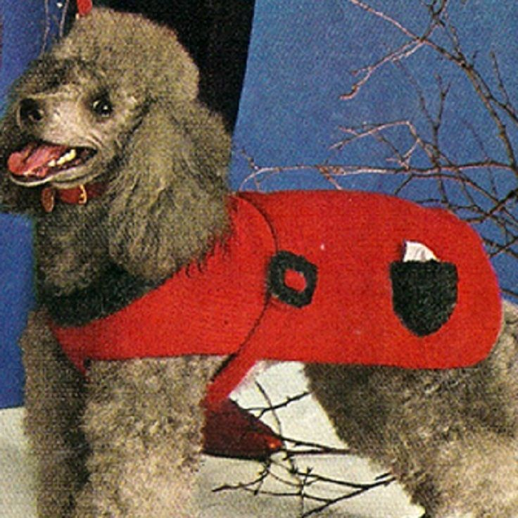 Top 10 Free Knitting Patterns For Cats and Dogs - Top ...