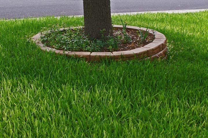 Carpet Grass For Lawns Warm Season Grass Grass Backyard