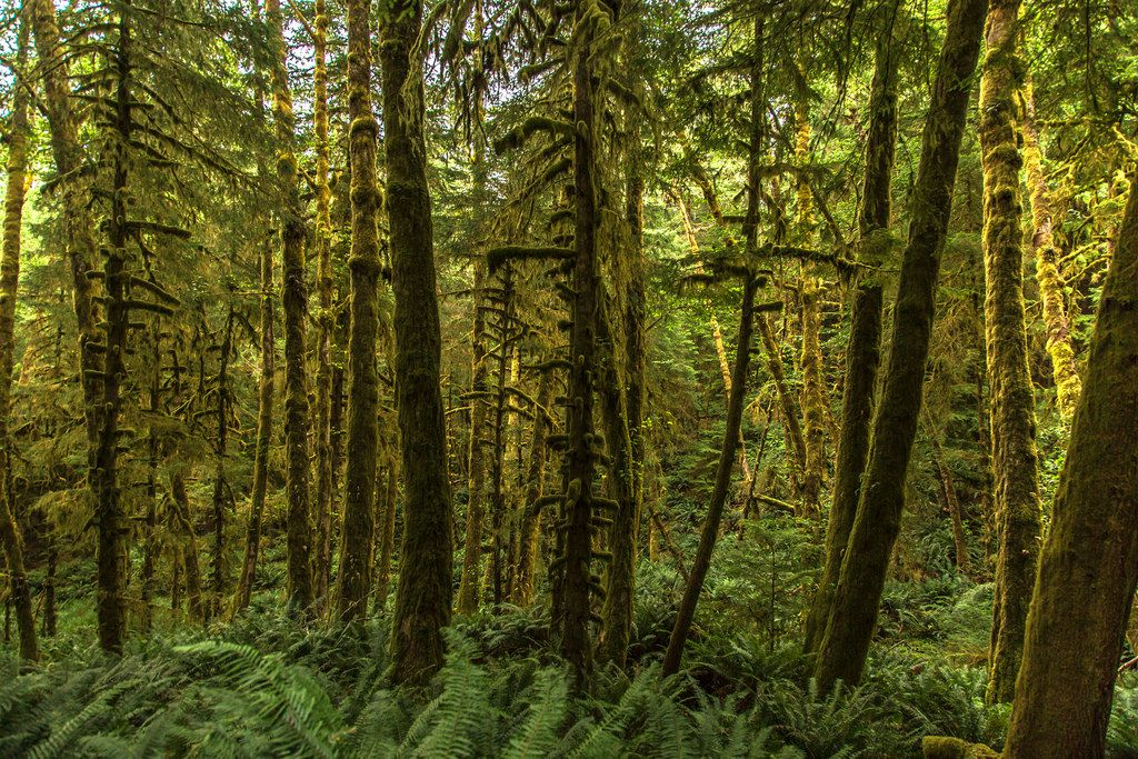https://flic.kr/p/FNRP2J   Ecola Forest   Along the road to Indian Beach in Ecola State Park on the Oregon Coast. Thanks for the visits and comments.