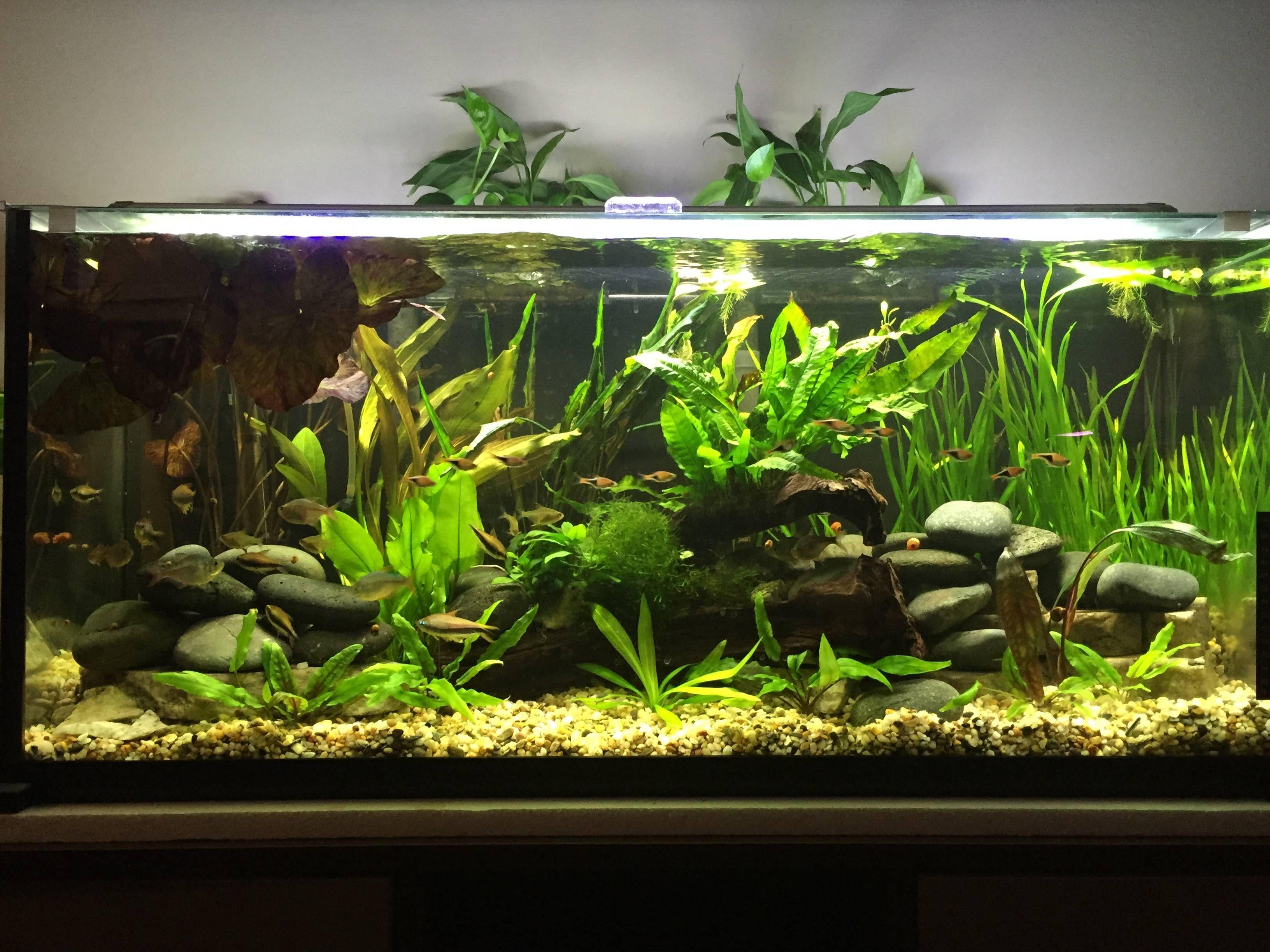 Image Result For 29 Gallon Aquarium Fish Tank 29 Gallon