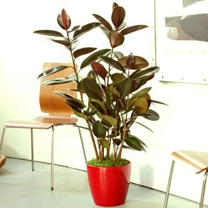 Indoor Folliage Plants | Indoor Plants | Pinterest | Indoor plants ...