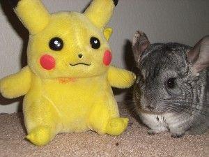 A Chinchilla And His Pokemon Buddy Cool Pets Small Pets