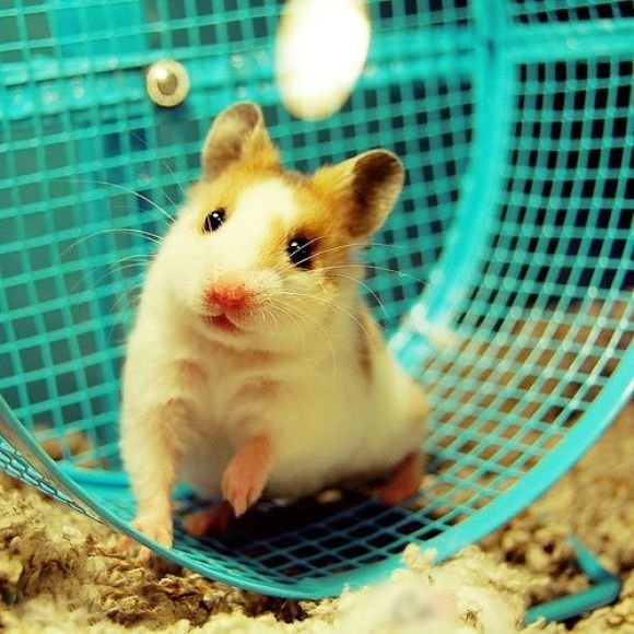 I've looked after around 10 hamsters in my life... Time