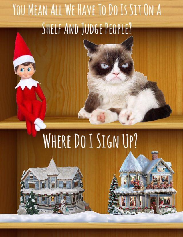 Grumpy Cat On A Shelf Grumpy Cat Humor Grumpy Cat Cat Memes Clean