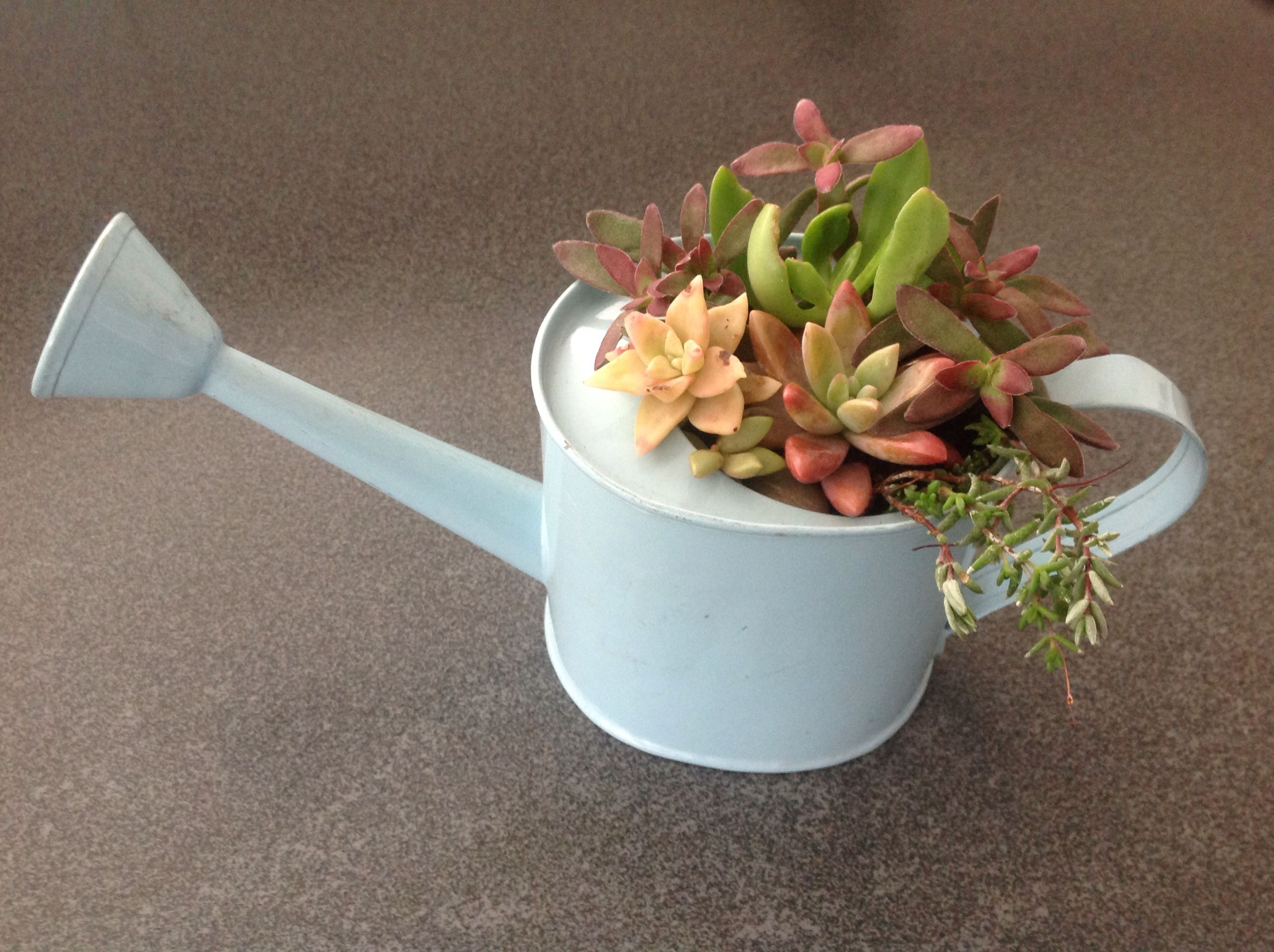 Succulents In A Little Watering Can