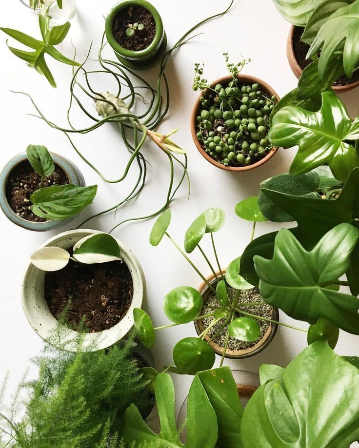 Awesome Houseplant Blog|Clever Bloom