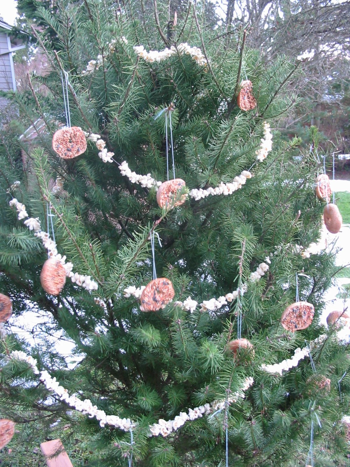 Christmas tree for the birds homemade christmas tree