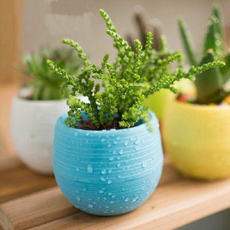 Pinterest & 3 Inch Plastic Round Succulent Planter Flower Pots Cactus ...