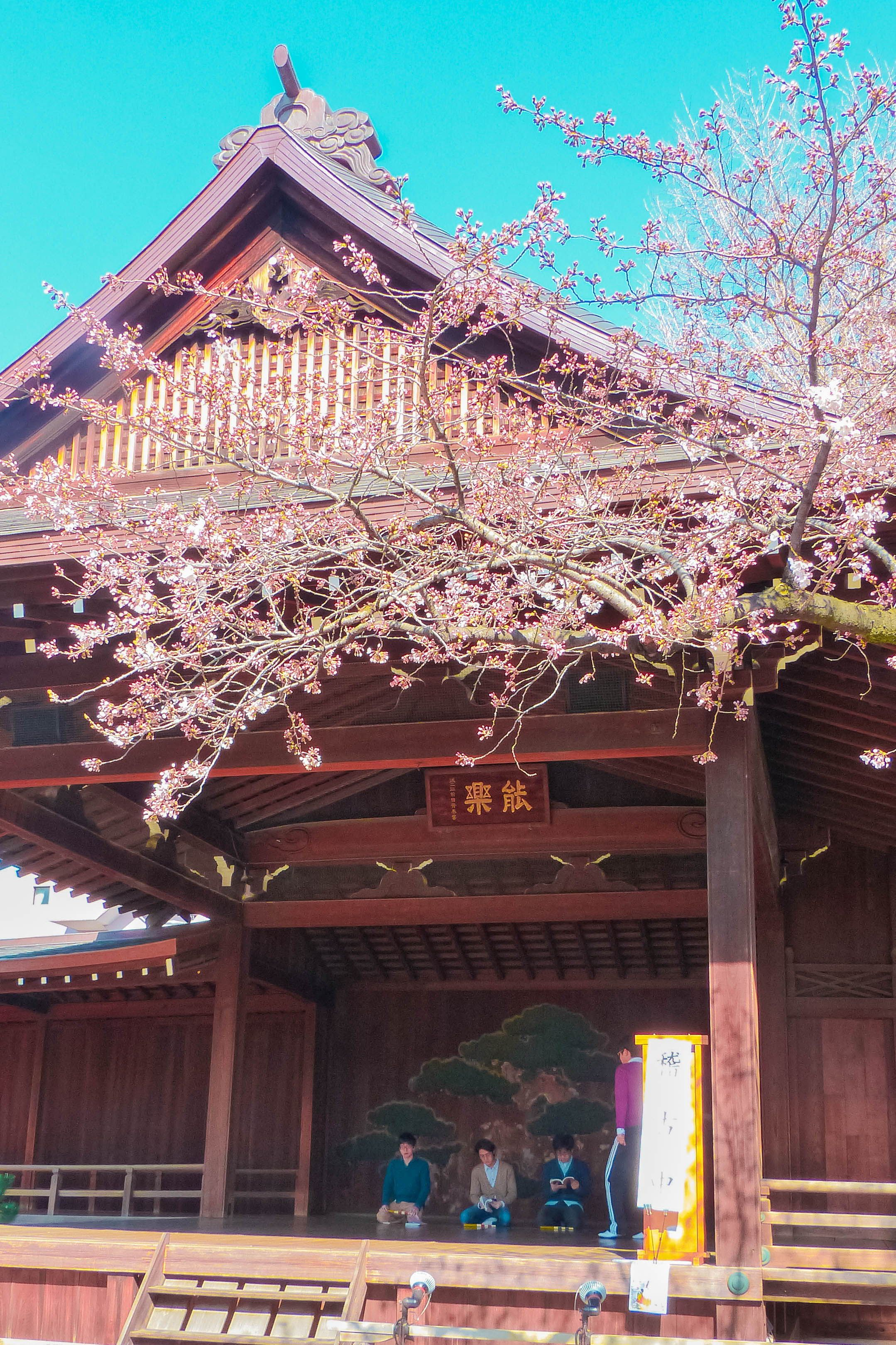 25 Best Places To See Cherry Blossoms In Tokyo Free Guide Yasukuni Shrine Japan Travel Tokyo
